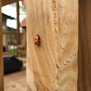 Over the last several years, we have released a few thousand ladybugs in the garden.  It appears that a colony has decided it likes what is here and is hanging around.  This is the first year we have seen the transformation from young to adult ladybugs.  They really like the wooden structures to attach themselves to while going through this change.  Pretty cool to see the daily change in a process that takes nearly a week.